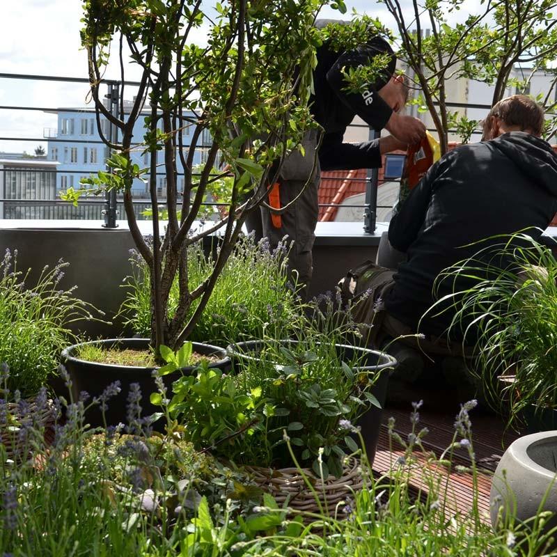 Garten Ehren dachterrasse hamburg winterhude garten ehren pflanzen