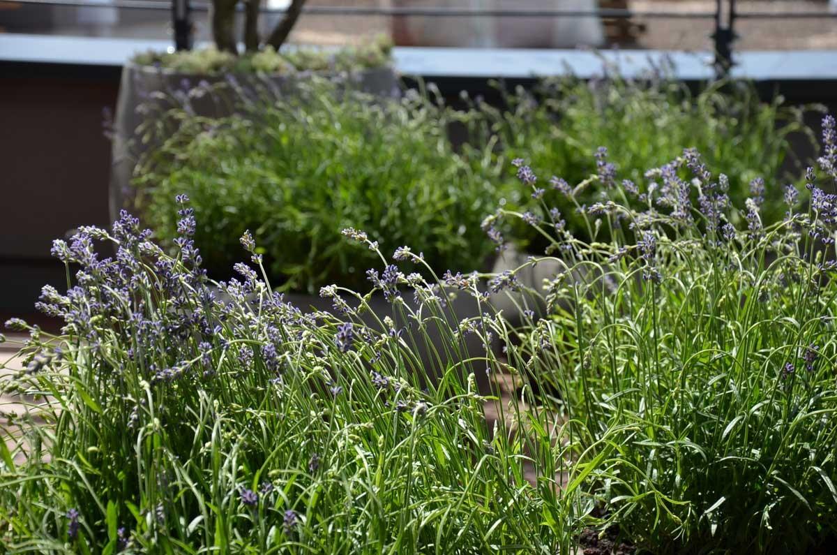 Ziergräser Im Garten Bilder dachterrasse hamburg winterhude garten ehren pflanzen