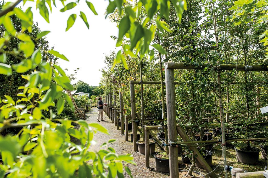Garten von ehren for Friederike von ehren