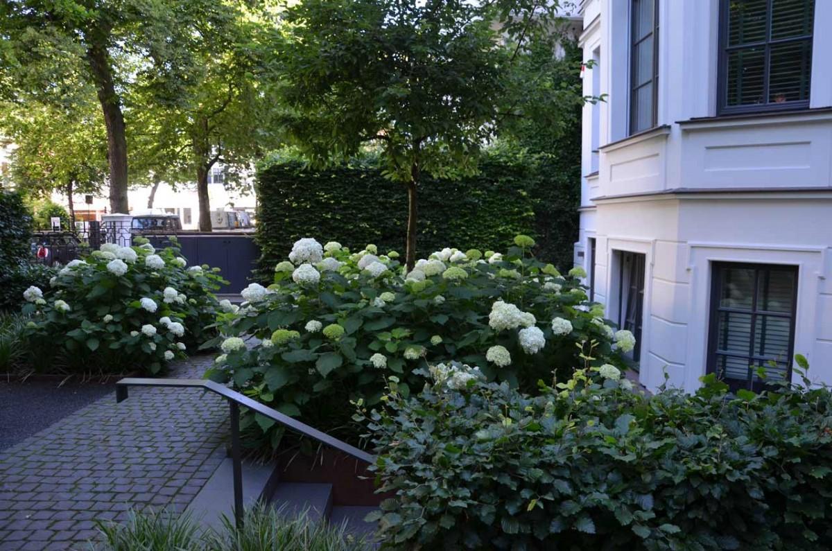 Garten Ehren halb schattiger vorgarten in hamburg winterhude garten ehren